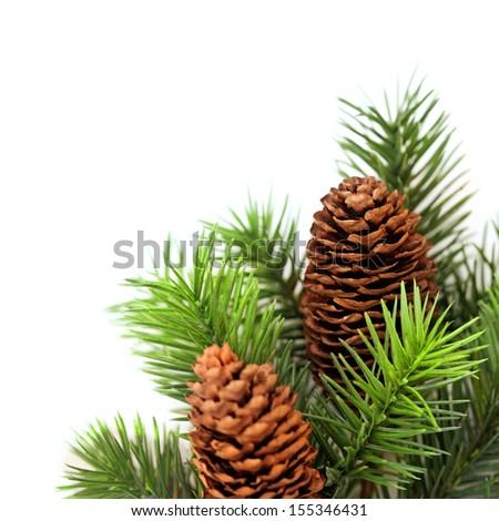christmas tree branches on white background - stock photo
