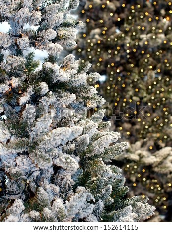 christmas tree covered with snow and sparkling christmas lights in the background  - stock photo