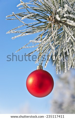 Christmas-tree decoration on a pine tree covered with hoarfrost, shallow depth of field - stock photo