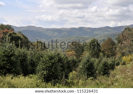 Christmas Tree Farm in the Mountains of North Carolina Horizontal With Copy Space - stock photo