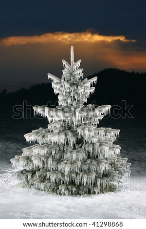 Christmas tree icicles, blue spruce on sunset background