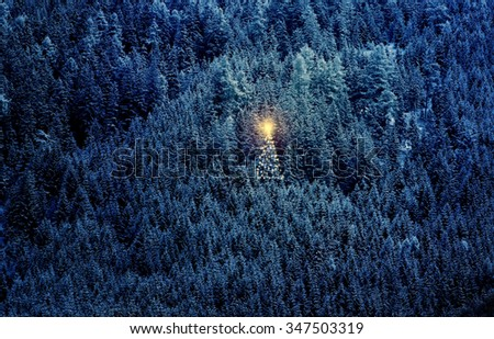 Christmas tree in the forest,Silent night with lights - stock photo