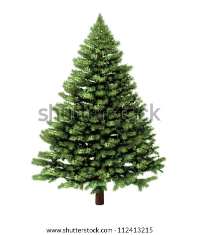 Christmas tree isolated on a white background without any decorations as a festive evergreen single plant with detailed pine needles for the holiday season including New Year. - stock photo