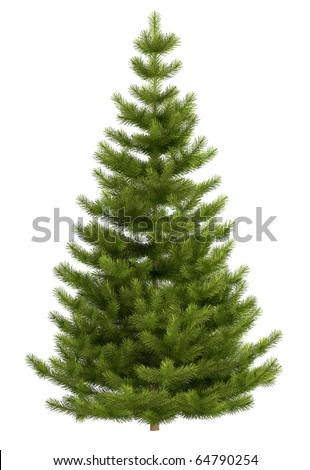 Christmas tree isolated on white background. High quality insulation - stock photo