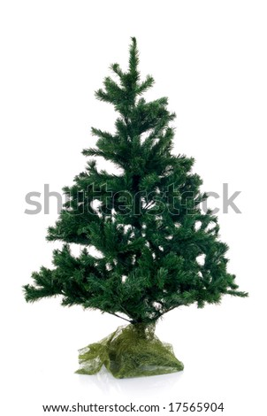 Christmas tree not decorated isolated on white background - stock photo
