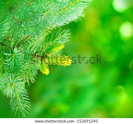 Christmas tree - pine tree - stock photo