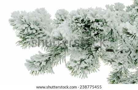 Christmas tree with snow - stock photo