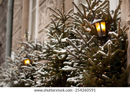 Christmas trees lamp lights outdoor decoration in Warsaw, Poland. Trees decorated in lighting chains for Xmas Eve night, exterior in horizontal orientation, nobody. - stock photo