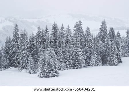 Christmas trees piled snow winter mountain landscape