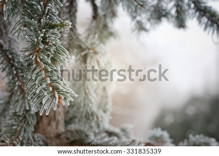 Christmas, winter background with frosty pine tree. Macro shot - stock photo