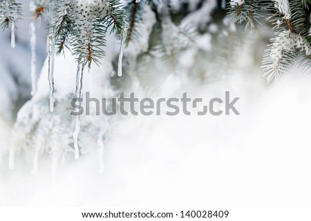 Christmas winter background with icicles hanging from spruce branches - stock photo