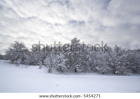 Christmas Winter landscape - stock photo