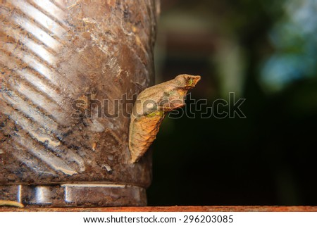 chrysalis of butterfly hanging