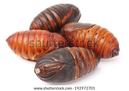chrysalis silkworm ,silk worm cocoon on white background  - stock photo