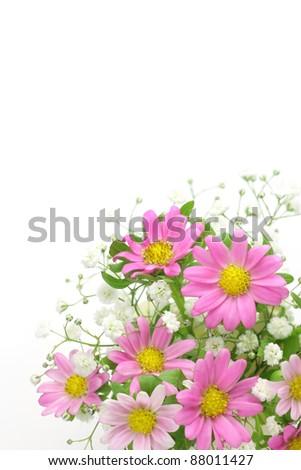 chrysanthemum and haze grass - stock photo