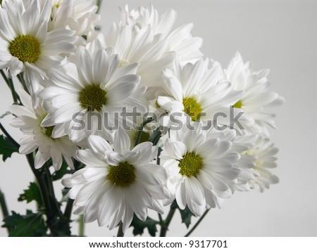 chrysanthemum bouquet - stock photo