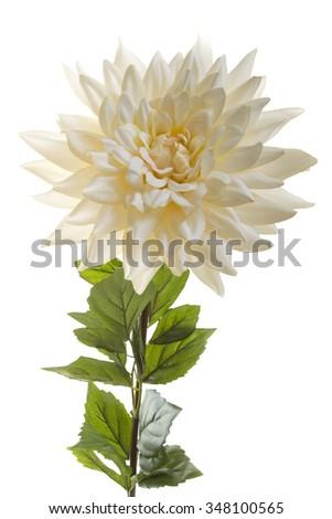 Chrysanthemum cream artificial flower isolated on a white background - stock photo