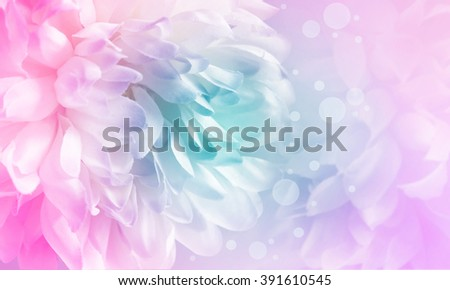 Chrysanthemum flowers and bokeh made with color filter and blur style for background - stock photo