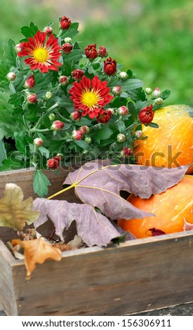 chrysanthemum flowers and fallen leaves in a wooden box in garden - stock photo