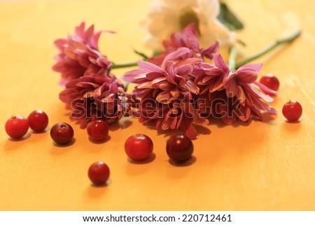 chrysanthemum flowers berry cranberry cranberries vitamin - stock photo