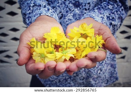 Chrysanthemum flowers with hands