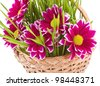 Chrysanthemum with grass in the basket - stock photo