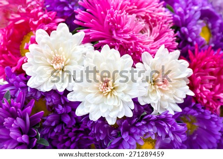 Chrysanthemums and asters. - stock photo