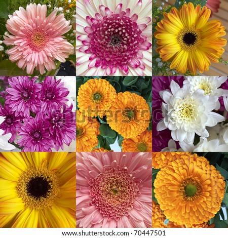 chrysanthemums,calendula and Gerber flowers, natural background - stock photo
