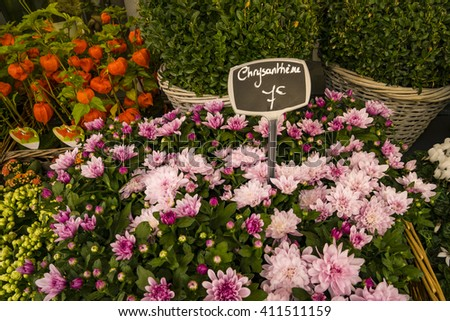Chrysanthemums for sale in Paris flower shop, with labels displaying euros - stock photo