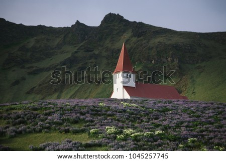 Church on a hill in the Vik town. Famous and popular tourist attraction of Iceland. Glade of lupine flowers. World beauty