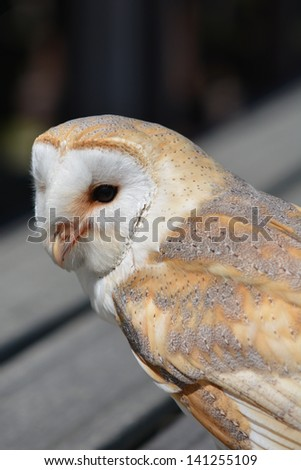 church owl sitting on wooden bench
