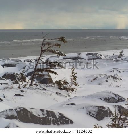 Churchill Northern Manitoba Canada Tundra Shoreline - stock photo