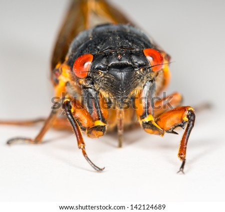 Cicada from Brood II in 2013 in Virginia. Detailed macro image against white background - stock photo