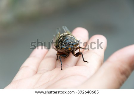cicada perching on human hand, selective focus, abstract blur background, shallow depth of field - stock photo