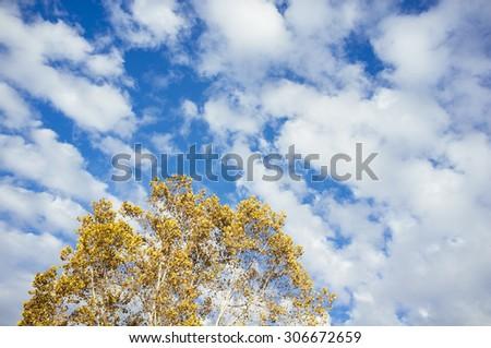 cielo azul con nubes y �¡rbol oto�±al - stock photo