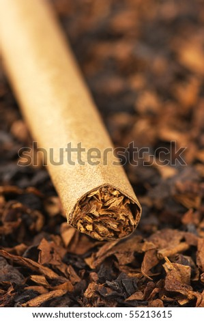 Cigar on heap of cut tobacco close-up. - stock photo