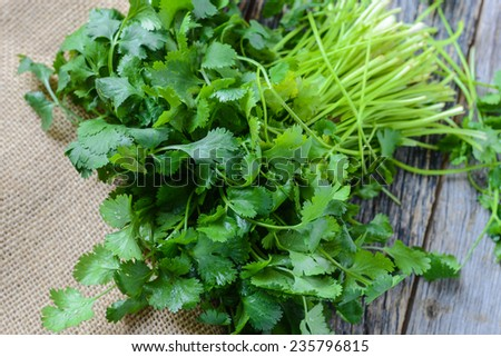 Cilantro on Wooden Background