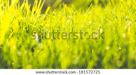 Cinematic shot of grass with drops and bokeh - stock photo