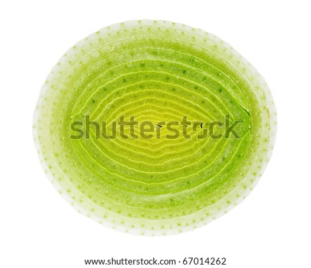 Circle cross-section of green leek isolated on white - stock photo