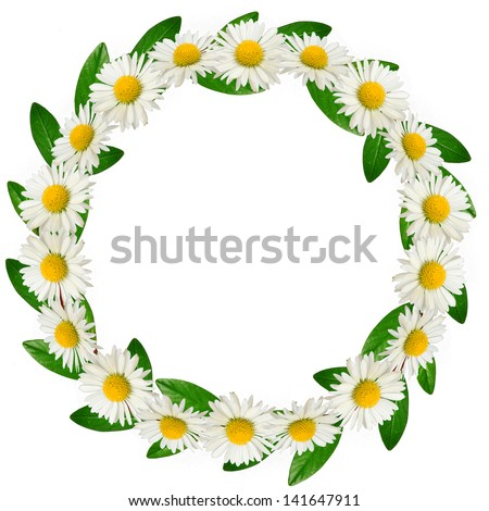 Circle frame of daisies and green leaves on the white background