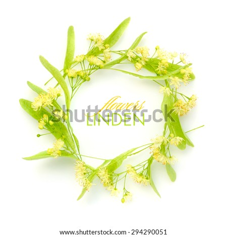 Circle with linden flowers on a white background - stock photo