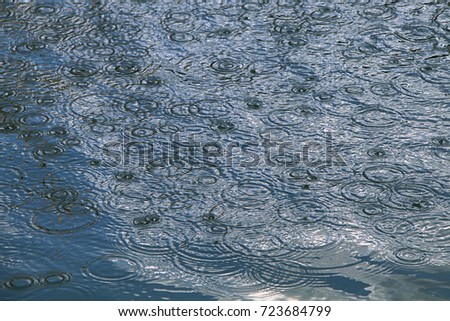 Circles on the water. Rain. Drops of rain fall on the puddle