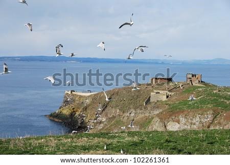 Circling Gulls - stock photo