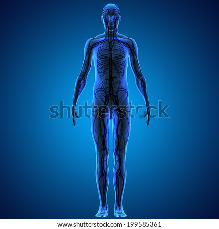 Circulatory system - stock photo