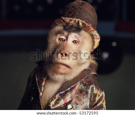 Circus chimpanzee monkey in a suit and a hat. Photo. - stock photo