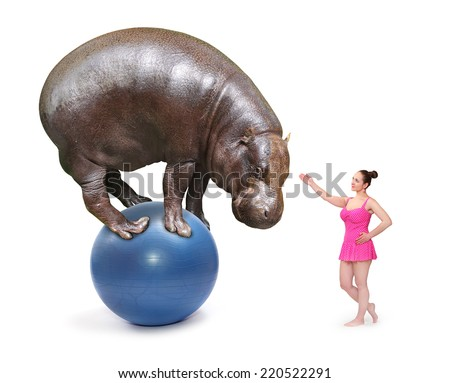 Circus clown girl and african Hippo balancing on a blue ball. - stock photo