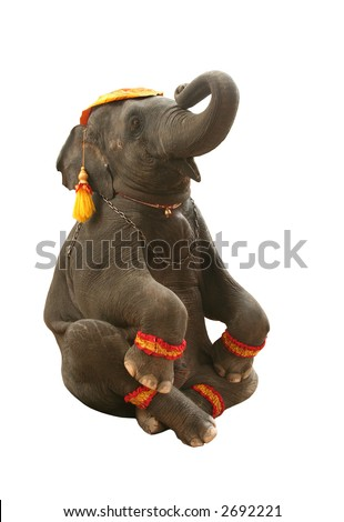 Circus elephant in seated position. - stock photo