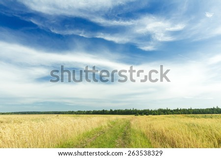 Cirrus clouds on azure sky above green rye field and dirt road - stock photo
