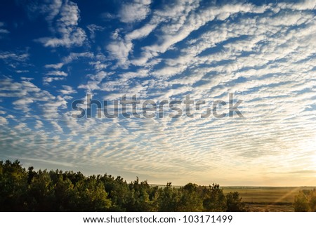 Cirrus clouds over the forest at sunset. - stock photo