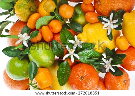 citrus fruits mixed top view texture  on white background - stock photo